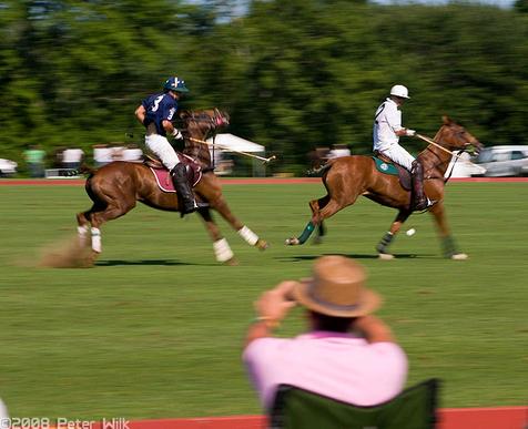 racinghorses.PNG