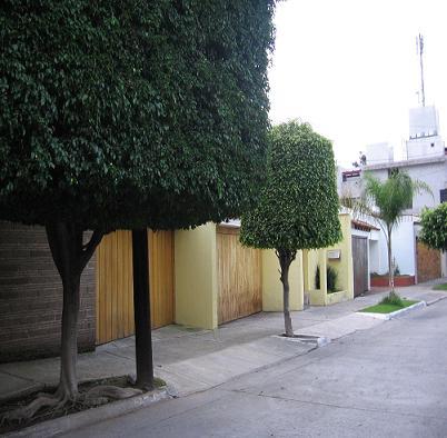 moldedtrees.JPG