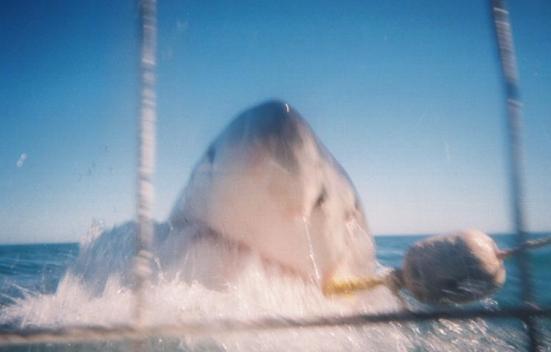 sharkattack.PNG